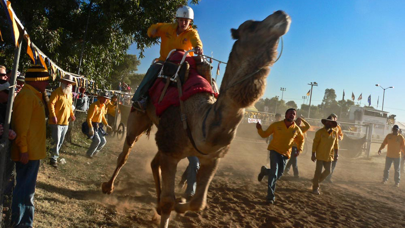 a woman riding a camel in a race