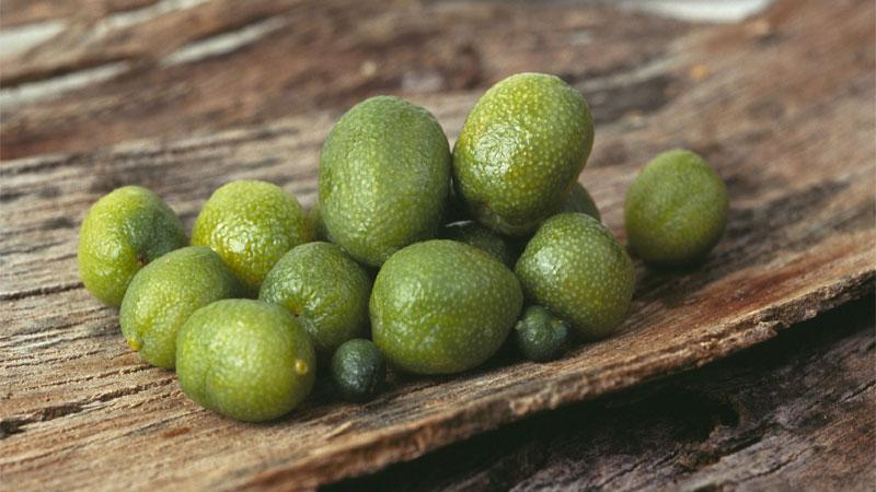 Few Australian desert limes