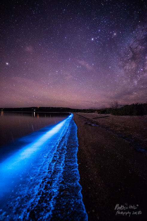 Bioluminescence in South Arm, Tasmania