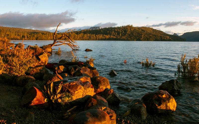 Walk Tasmania, the shores of Lake St Clair – TassieEye