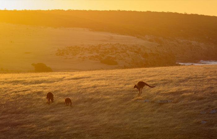 Kangaroo-Island---Matthew-Fuentes-2