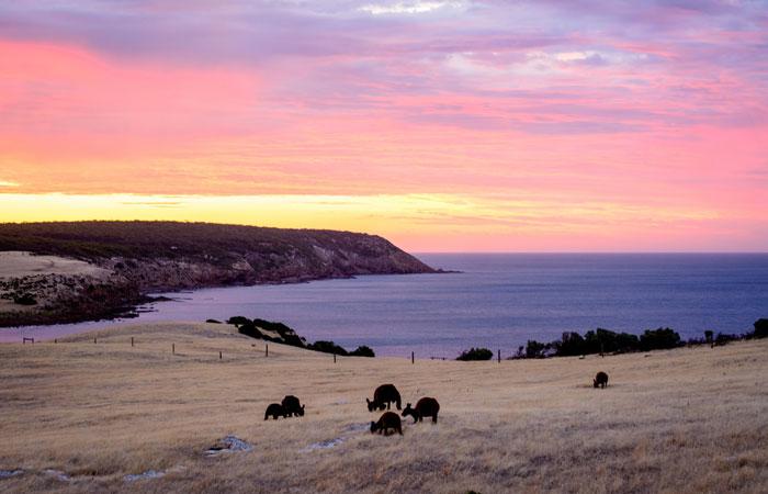 Kangaroo-Island---Matthew-Fuentes-3