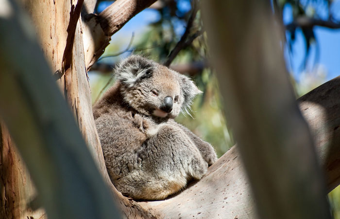 Kangaroo-Island---bluedeviation