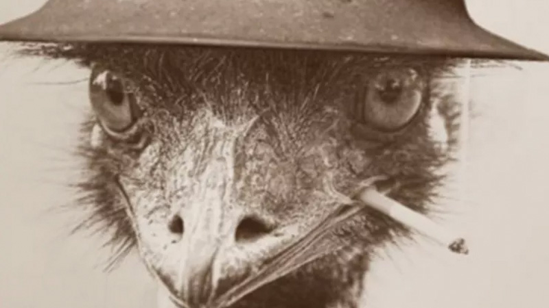 emu-war-australia-historybuff