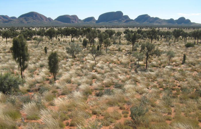 Outback tours desert oak - Simon Brown