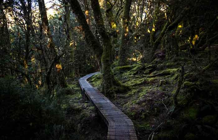 Tasmania-Cradle-Mountain-boardwalk---Tasmania-Tourism