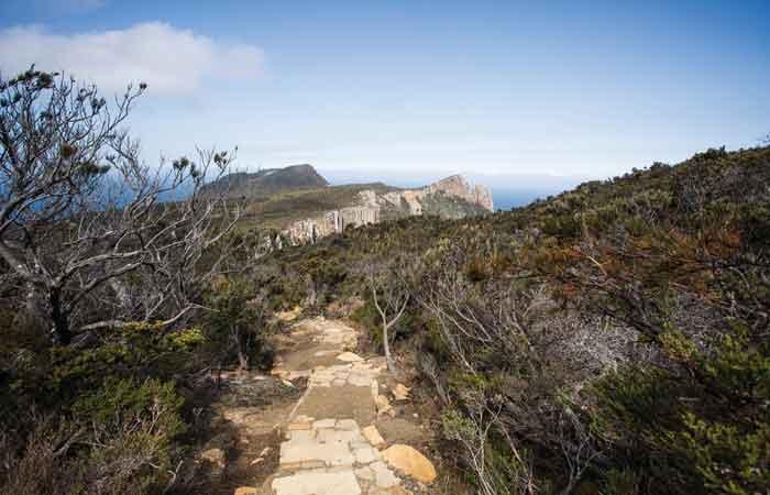 Tasmania bushwalk logging tourism