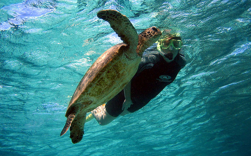 Turtle with snorkeller, Ningaloo reef