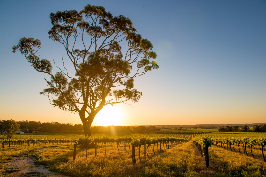 sunset over Barossa Valley
