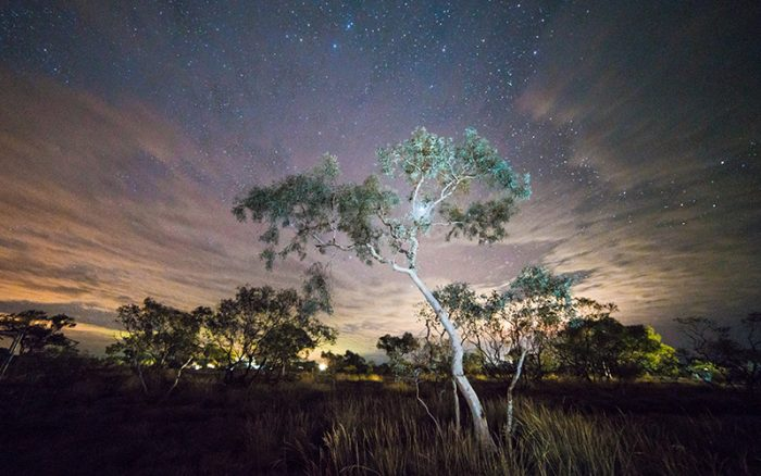 Gum tree set aginst the starry night sky in outback australia