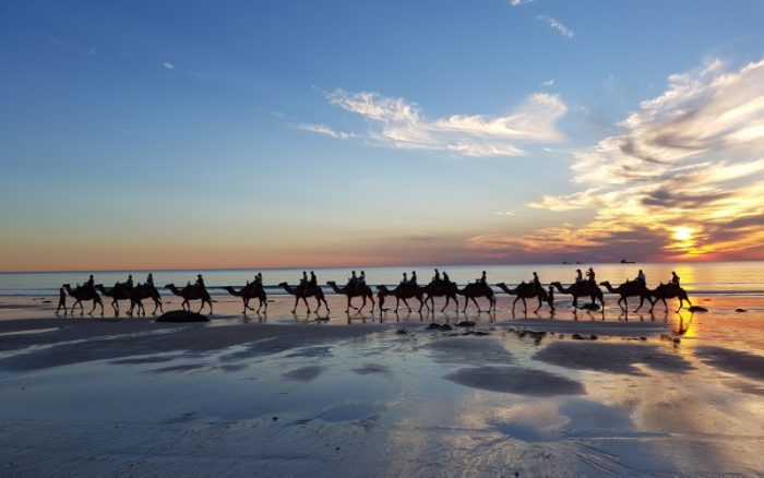 A group of 15 camels walking along the beach with the sun setting in the background