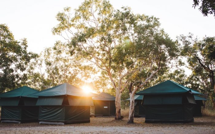 4 tents under gum trees with the sun shining through the trees
