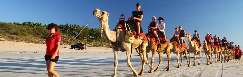 Broom camel rides