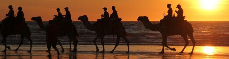 Camels walking along Cable Beach in Broome, Western Australia