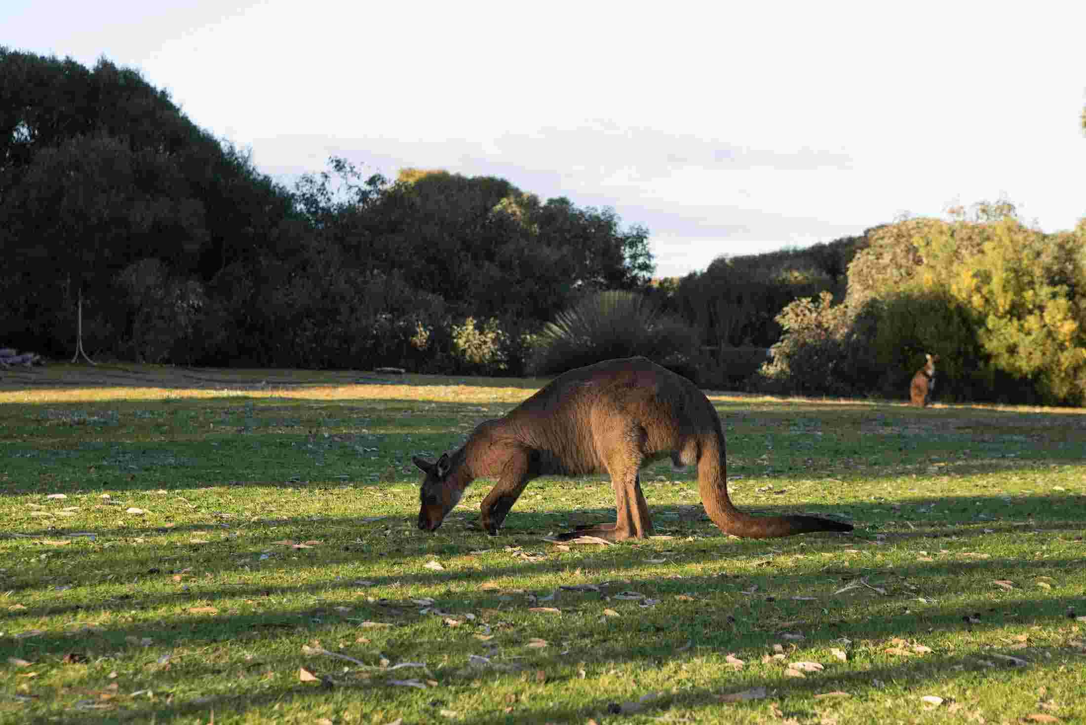 kangaroo island tours travel u0026 trips 2017 adventure tours australia