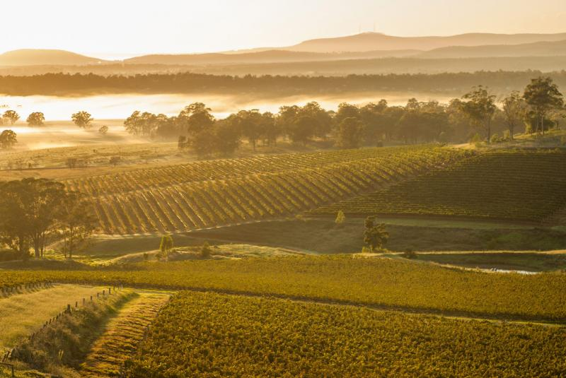 Hunter Valley vineyards, New South Wales
